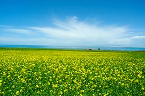 兰州到茶卡盐湖、青海湖纯玩二日游