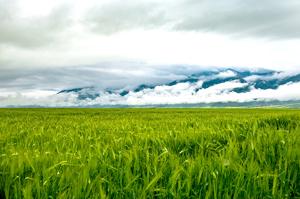 兰州到扎尕那、莲宝叶则、拉卜楞寺、郎木寺、九曲黄河第一湾、若尔盖草原、阿万仓湿地、花湖8日游